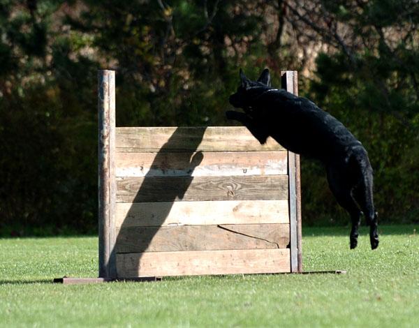 SchutzhundII 10