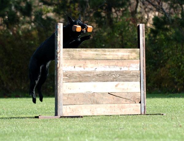 SchutzhundII 11