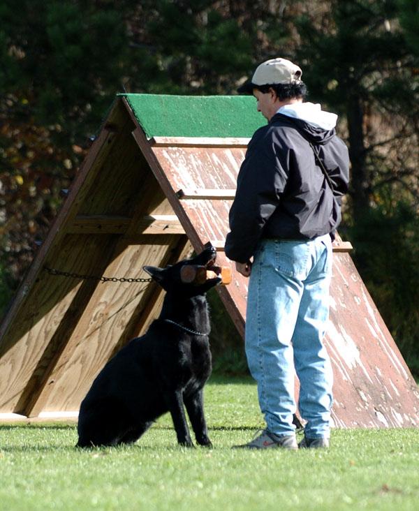 SchutzhundII 12