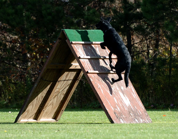 SchutzhundII 13