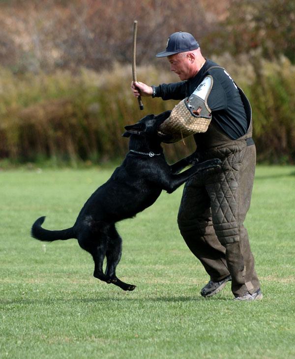SchutzhundII 17