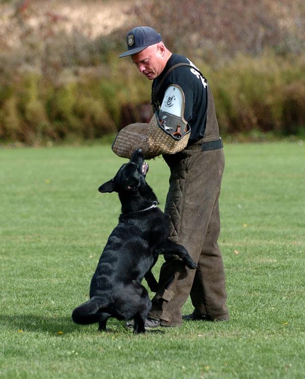 SchutzhundII 18
