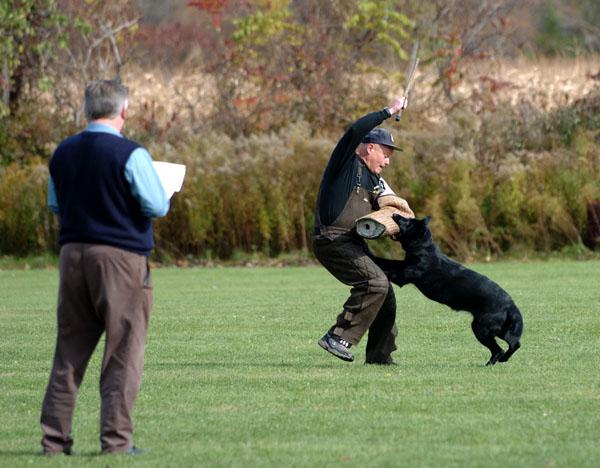 SchutzhundII 19