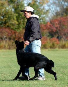 SchutzhundII 03