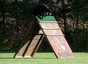 SchutzhundII 14