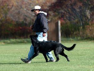 SchutzhundII 15