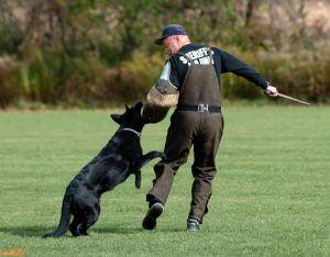 SchutzhundII 16