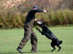 SchutzhundII 21