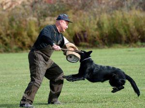 SchutzhundII 22
